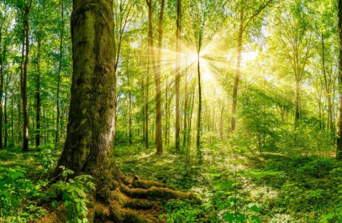 Neue Kooperation von GreenSign und PREGAS