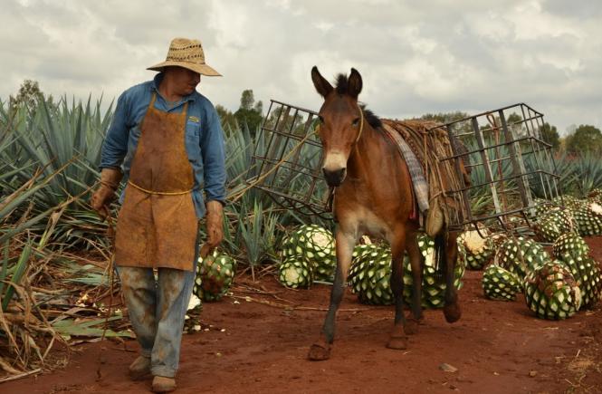 Regelungsausschuss für Tequila CRT